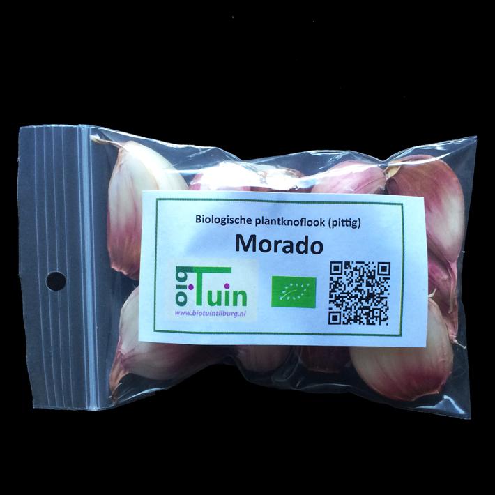 Knoflook Morado - Pittig