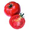 Tomaten zaden St. Pierre - Kas en buitenteelt
