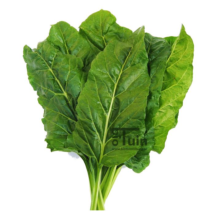 Snijbiet zaden Groene